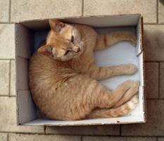 cat in a box by fiori-di-ofelia
