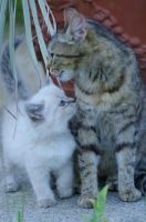 Chaton 53 by Tanahe