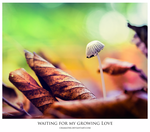 Waiting for my growing love by chamathe
