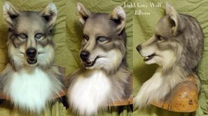 Pale Grey Wolf by Magpieb0nes
