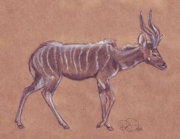 Spiraly Antelope by RianaLD