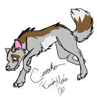 Ceeako Pounce quick color by KM-cowgirl