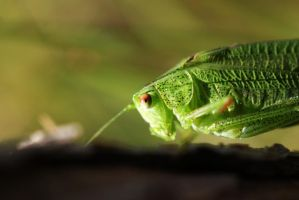 green hopper by LaPlumeIlDisait