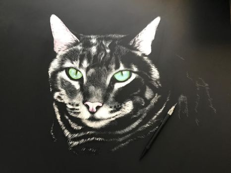 Scratchboard cat - WIP by shonechacko