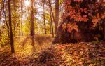 Autumn sun by haxxy