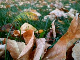 The Fallen Leaves of Autumn by CTSD24
