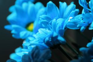 Blue.... by Tiger--photography