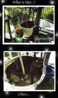Chico in flowerpot by WaterdragonWave
