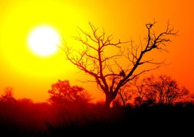 African Sunset by ria001