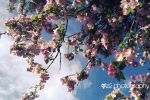 More Spring Blossoms by xe2x
