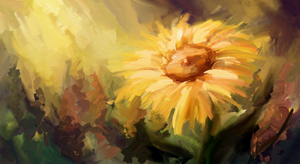 Sunflower by Mig515