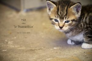 Max alias 'Sir Pounce-A-Lot' by Vic-R
