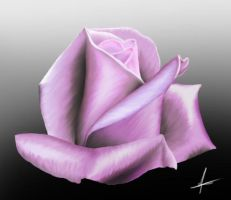Rose - Anton1st tablet drawing by antongj
