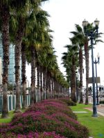 Palm Tree Row by RichGinter