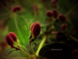Patience by cadydid