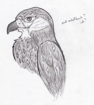 Red-Tailed Hawk? by Cyphia