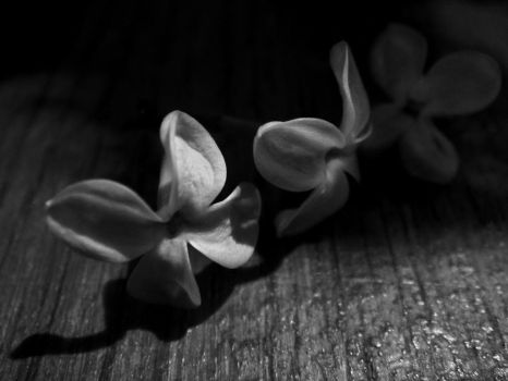 petals black and white by ubinko