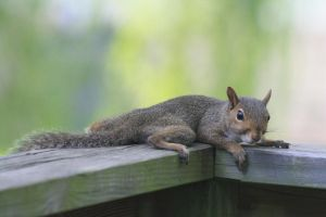 Lazy squirrel by GUILTY-SPARK343