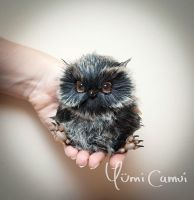 Tiny baby owl Spook by YumiCamui