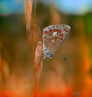 Tiny in Red by Callu