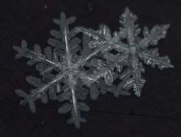 snow macro by Molamola