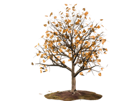 Trees 18 PNG Stock by Roys-Art