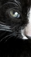 MVI, my little cat by Lady-Avees