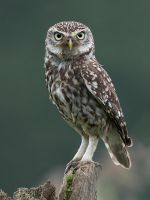WHO are you looking at ??? by Jamie-MacArthur