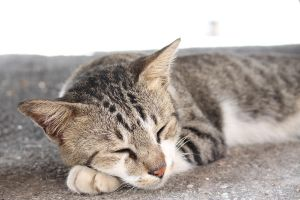 Napping cat by daniel4132