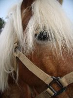 Horse looking at the camera by EmiiLly