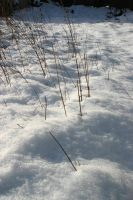 Winter - snow and weeds by ArtistStock