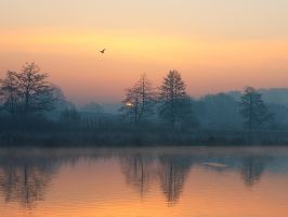 Early bird by starykocur