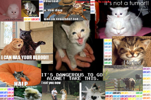lolcats wallpaper by vanilla-the-echidna