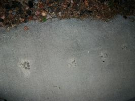 Paw Prints by Gell-pen