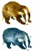 Blue and Yellow Badgers by The-Draiger