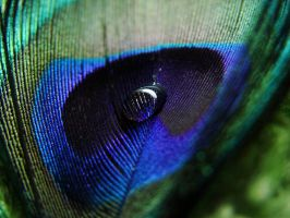 Colours of Peacock by IRAtheIV