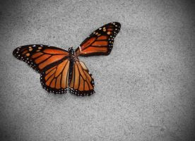 Death of a butterfly by firesign24-7