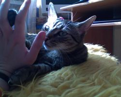 Finger by Woolfred