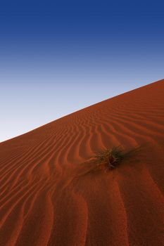 Life in the dune by ziyad2010