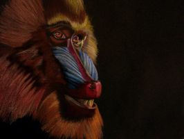 Mandrill by Icarus667