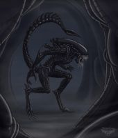 Xenomorph by Notorious84