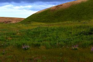 Roadside Columbia Basin - Background by Valarian-Warrior