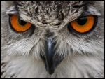 Turkmanian Eagle Owl by cycoze