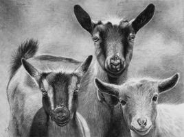 Goats by AGillustration
