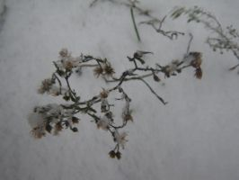first snow in Syberia 2010 by snowdecember