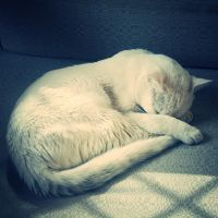 White fur. by JustPurelyMe
