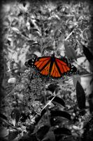 Butterfly by Takemybreathaway1191