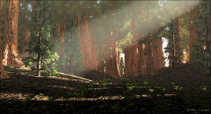 California Sequoia by jbjdesigns