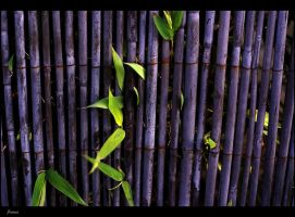 through bamboo by awjay