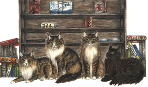 Maine Coons Peggy-Pelkey-PDQ-Josy by Roth-Fuchs